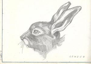 Dibujo conejo Raúl Romero